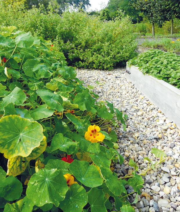 Estetické afunkční řešení zároveň. Vyvýšené záhony mohou mít ituto podobu, která se perfektně hodí pro pěstování bylinek. Majitele zahrady navíc potěší poměrně snadnou instalací aširokou možností uplatnění. Hodí se stejně dobře do venkovské iměstské přírodní zahrady. FOTO LUCIE PEUKERTOVÁ