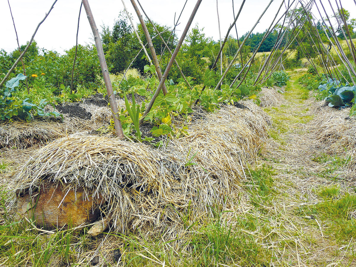 Kmeny stromů i drobné větve položí skvělý základ vyvýšeným záhonům. Dřevo postupným rozkladem zásobuje půdu důležitou organickou hmotou a navíc dodává vodu samotným rostlinám. Aby nedocházelo k půdní erozi, hned po výsadbě rostlin půdu zamulčujte slámou nebo posečenou trávou. FOTO LUCIE PEUKERTOVÁ