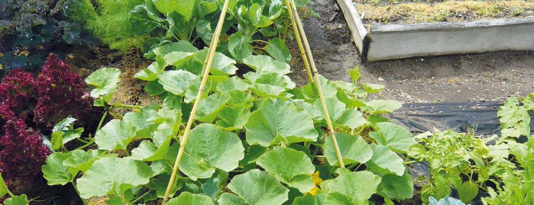 Podívejte se s námi do světa nekonvenčního pěstování rostlin