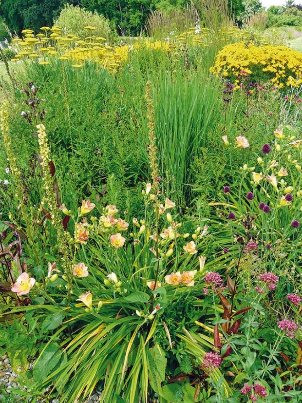 Poněkud chaoticky. Tak může působit prérijní záhon, ato kvůli druhové diverzitě. Ta je ale příčinou nenáročné údržby, což časově zaneprázdnění majitele zahrad ocení. Jakmile se jedné rostlině přestane dařit, nahradí ji bujně rostoucí soused nebo mladý semenáček. FOTO LUCIE PEUKERTOVÁ