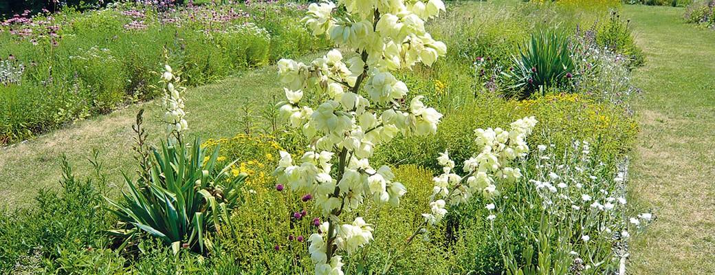 Květinové záhony s minimální potřebou péče