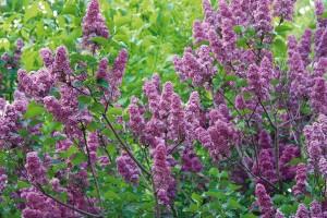 Deset červnových úkolů do zahrady