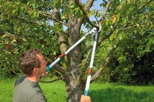 Nevíte si rady při výběru ručních zahradních nůžek?
