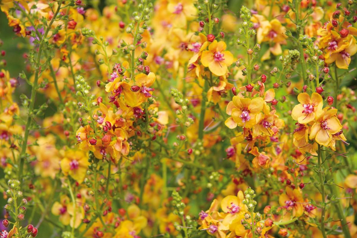 10 nejkrásnějších rostlin pro rozkvetlé léto