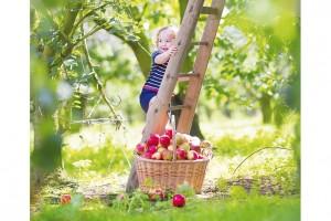 Zahradní škůdci na ovocných stromech a jak s nimi bojovat