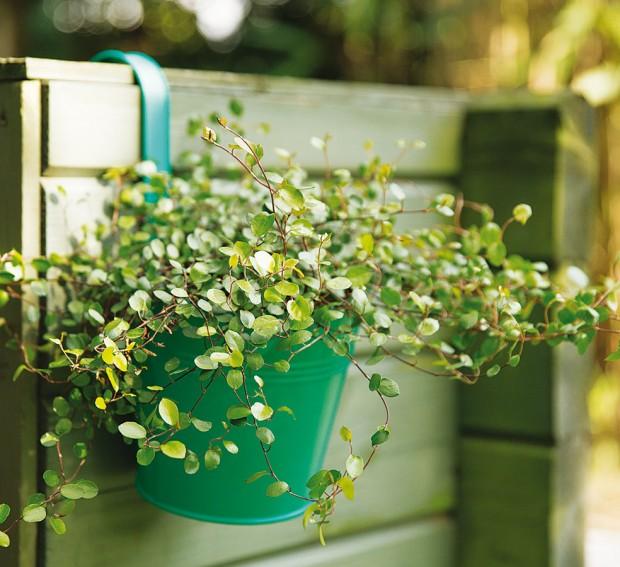 Závěsný květináč Zinc, Butlers, zinek, vrůzných barvách avelikostech, 149 Kč