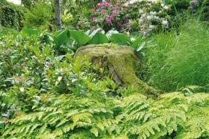 Podrosty mají vzahradní architektuře rozhodně svoje místo. Jejich potenciál využívali zahradní architekti již před mnoha stoletími. Uplatňují se především vlesních typech zahrad, ale jejich krásu si užijete ipod několika málo dřevinami na své zahradě. FOTO LUCIE PEUKERTOVÁ