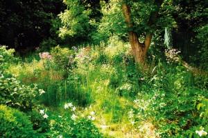 """""""Máme zkušenost, že krásná zahrada sdokonalým trávníkem aliniemi vyžaduje trvalou péči adesítky kilogramů umělého hnojiva, postřiků akondicionérů. Tomu jsme se chtěli uSněženky vyhnout adát šanci přírodě, aby se řízeně prosadily ty druhy, které do dané lokality patří,"""" vysvětluje majitelka."""