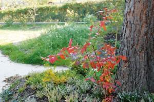 Přeměna staré spustlé zahrady v nostalgickou krásu