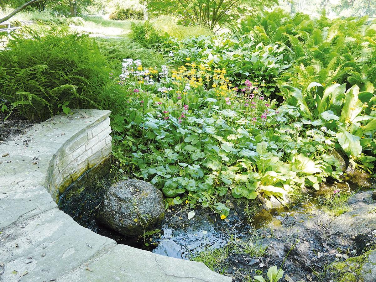 Stinné apolostinné stanoviště sdostatkem vody je jako stvořené pro prvosenky (Primula x buleesiana) – vzahradě rozhodně nepohrdnou okolím jezírka či prameniště. Patrovitá květenství různých barev rozkvétají vkvětnu. FOTO LUCIE PEUKERTOVÁ