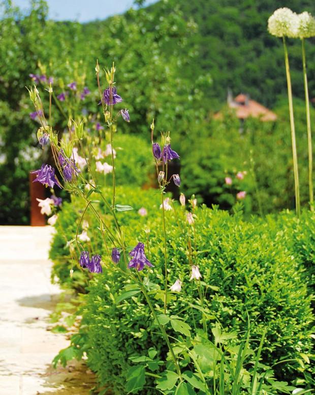 """""""Zjištění, že zahradu uvily Sněženka najdete ina prestižních stránkách worldlandscapearchitect.com, je pro nás úžasným oceněním,"""" těší se zúspěchu majitelka zahrady Eliška Břízová."""