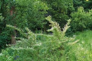 Divoce působící zahrada zrovna neodpovídá vkusu většiny majitelů satelitních zahrádek, takže kromě řady pochvalných reakcí se dámám, které se na jejím vzniku podílely, dostalo ikritiky.