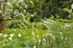 Většina rostlin vzahradě kvete bíle. Jednou zrostlin, která se způvodních porostů udržela, byla totiž sněženka. Ta dala jméno rekonstruované vilce apředurčila barevné ladění zahrady.