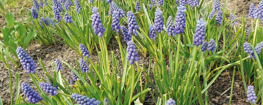 I pod korunami stromů můžete vypěstovat kvetoucí druhy keřů a trvalek