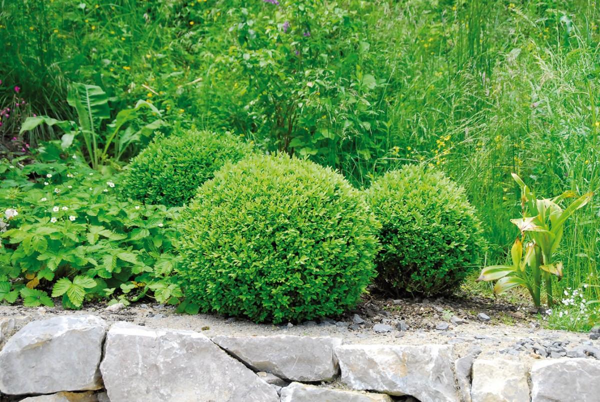 Za domem vyrostla opěrná zídka ztradičního sliveneckého mramoru. Klid zahrady umocňuje její střídmé barevné ladění arelativně úzký sortiment použitých rostlin.