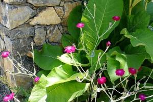 Kamenná zídka se skvěle uplatňuje jako praktický iestetický detail zahrady.