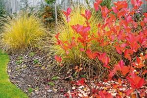 Podzim na zahradě ve Slaném doslova hýří barvami od sytě žlutých tónů přes okrovou až po karmínově červenou.