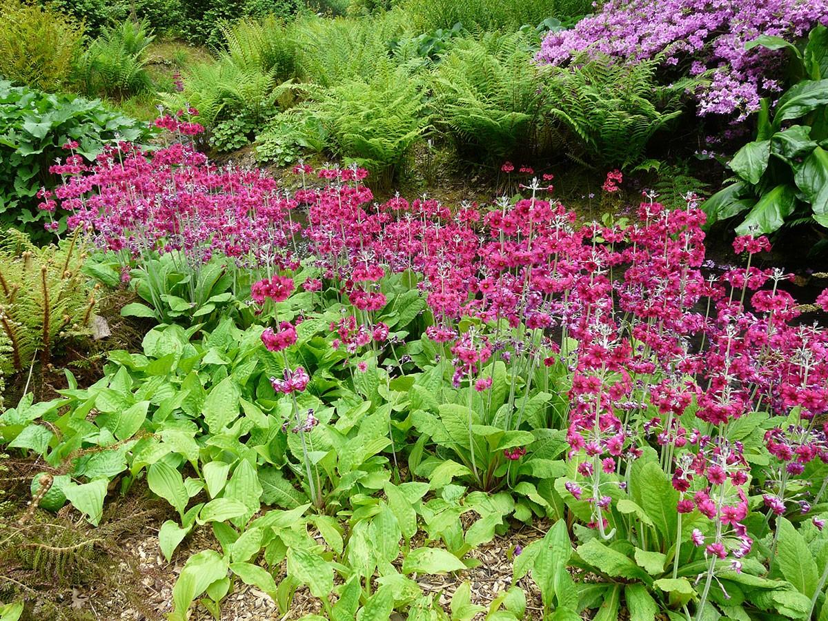 Sortiment rostlin se každý rok výrazně rozšiřuje, je proto dobré sledovat novinky. foto: Lucie Peukertová