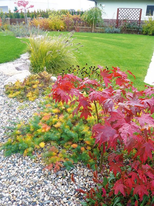 Okrasnou aasijskou část odděluje suchá zídka, která je šikovným aestetickým řešením pro všechny zahrady, kde je nutné vyřešit terénní převýšení.