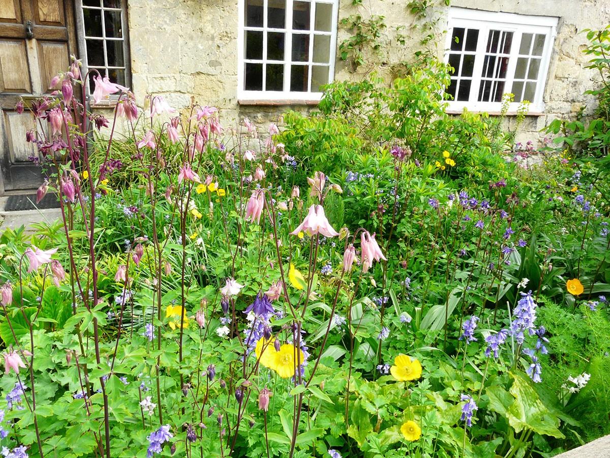 Předzahrádka v anglickém Oxfordu plná květin se schopností samovýsevu.