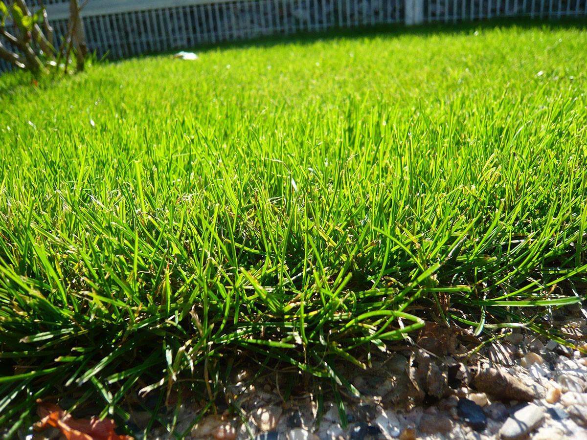 Mnohdy na minimalistické zahradě převažují travnaté plochy. FOTO LUCIE PEUKERTOVÁ