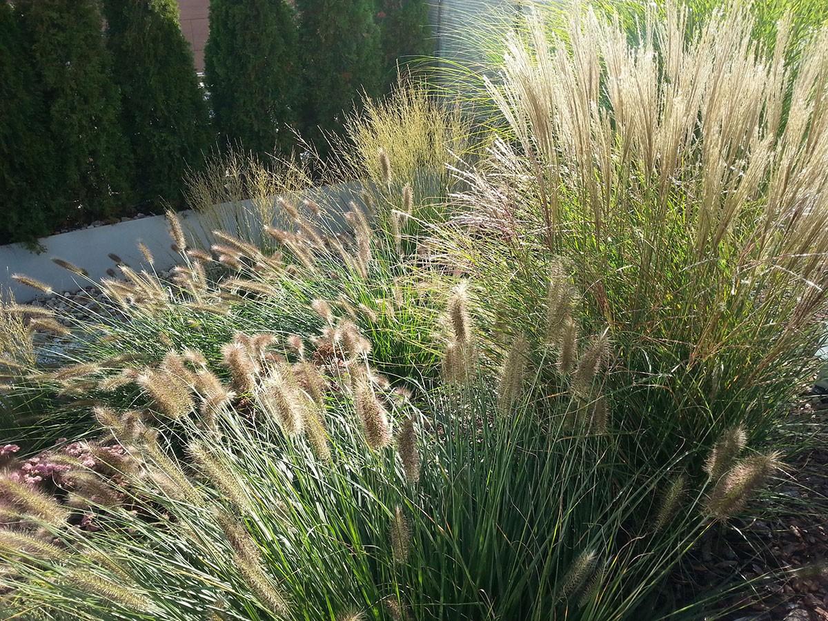 Uplatnění okrasných trav je v poslední době stále oblíbenější. FOTO LUCIE PEUKERTOVÁ