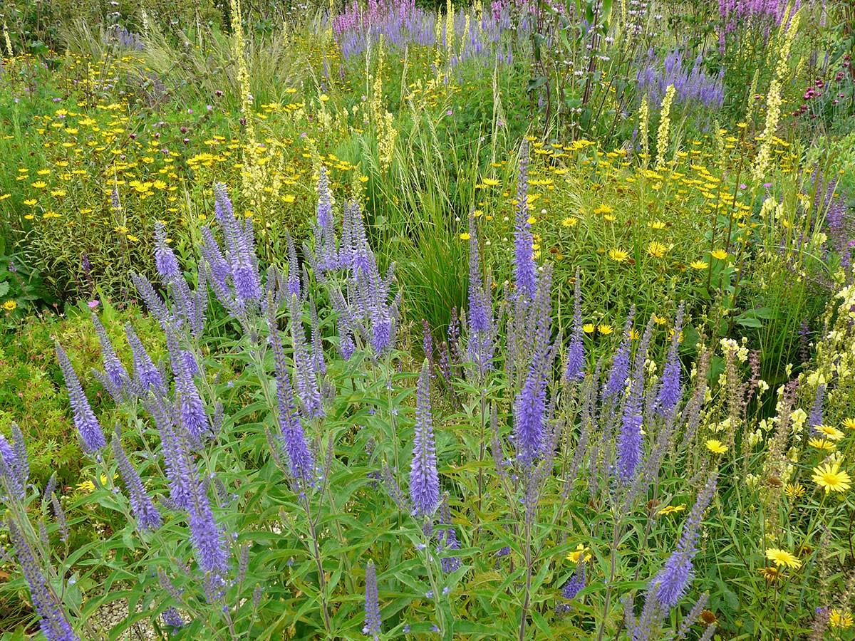 Trvalkové záhony jsou hitem soudobé zahradní architektury. Mají nízké nároky na údržbu a dynamický vývoj. FOTO LUCIE PEUKERTOVÁ