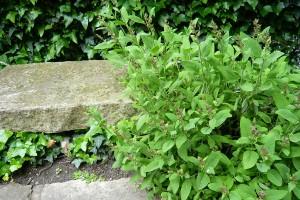 Posezení mezi bylinkami může fungovat dokonce jako aromaterapie. FOTO LUCIE PEUKERTOVÁ