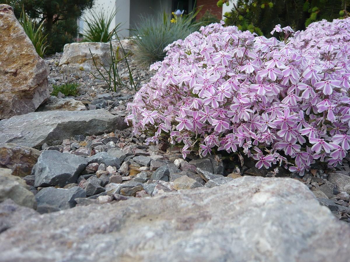 Pro kamenitý pozemek jsou jako stvořené skalničky nebo nenáročné druhy dřevin. FOTO LUCIE PEUKERTOVÁ