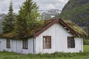 Jak si založit střešní zahradu