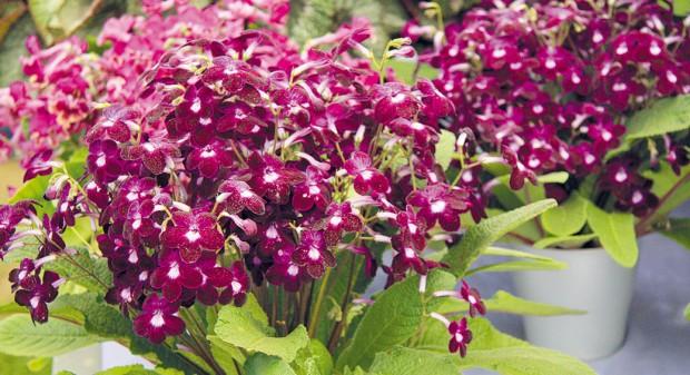 10 nejkrásnějších květů do interiéru