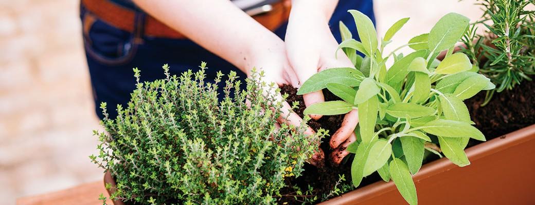 Jak na pěstování zeleniny uprostřed města
