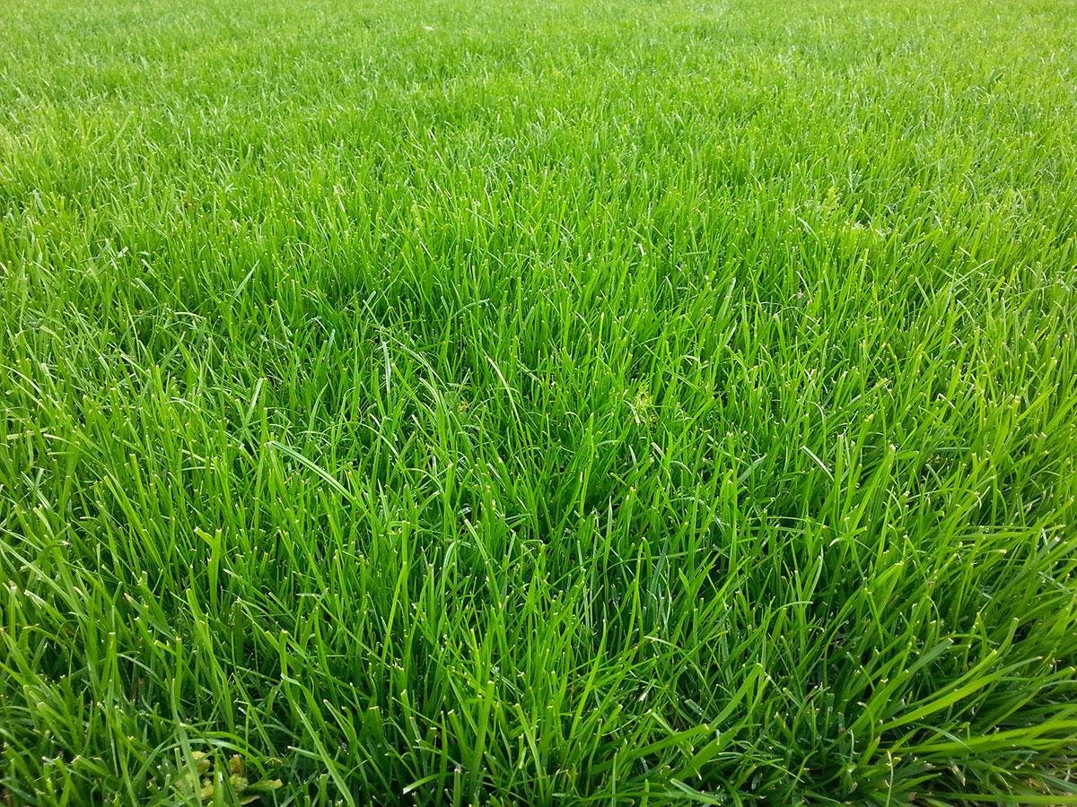 Jarní péče o krásný trávník