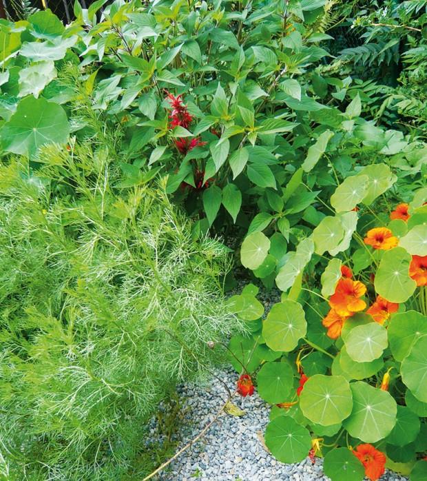 Pokud se pustíte do pěstování bylinek, určitě vás tento koníček už neopustí. Už jen samotná výsadba asklizeň představují úžasnou aromaterapii, na kterou se budete rok co rok těšit. FOTO LUCIE PEUKERTOVÁ
