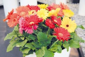 Kuchyň, kde voní i květiny