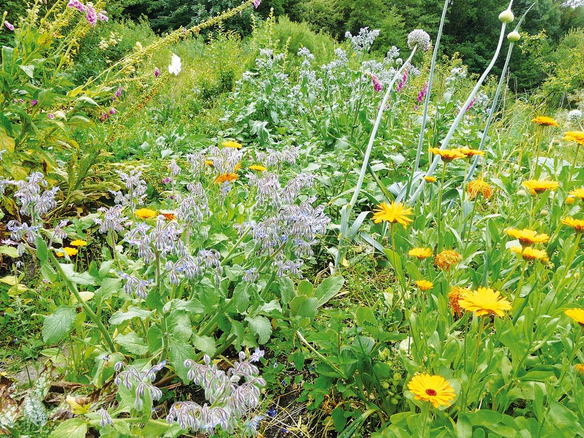 Bylinky nemusíte vždy pěstovat jako jednodruhové výsadby, které mají přesný řád. V přírodních zahradách vítězí na plné čáře pestré polykultury, kde vedle sebe rostou druhy vytrvalé i jednoleté. Ty se navzájem pozitivně ovlivňují, neunavují půdu a navíc představují skvělou pastvu pro opylovače. FOTO LUCIE PEUKERTOVÁ