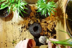 Priprava vysadbove koule foto: Lucie Peukertová