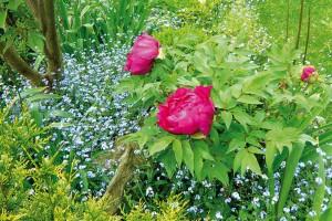 Dřeviny jsou stavebním kamenem každé zahrady, ité květinové. Pokud se každý rok těšíte na záplavu pestrých květů, zkuste si do jedné kompozice vysadit okrasné trvalky sněkterými atraktivně kvetoucími dřevinami. FOTO LUCIE PEUKERTOVÁ