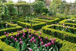 Cibuloviny pro většinu zahrádkářů představují první posly jara, kterých se během zimy nemůžeme dočkat. Jejich použití je naprosto všestranné. Hodí se do nádob na balkon nebo terasu, svými barvami rozzáří přírodní zahradu azajímavou důstojnost vtisknou iryze formální kompozici. FOTO LUCIE PEUKERTOVÁ