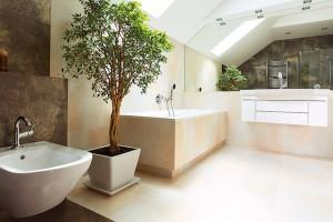 Výběru obalové nádoby věnujte náležitou pozornost. Vždy by se měla nést ve stejném stylu aduchu jako zařízení koupelny. Velikost nádoby vždy přizpůsobte velikosti rostliny. FOTO ISIFA/SHUTTERSTOCK