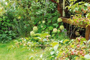 Venkovskou zahradu nesvazují žádná přísná pravidla, každá zahrada je zajímavým originálem. Nemusíte se při plánování výsadeb bát ani druhové pestrosti rostlinného sortimentu. Vždy ovšem kombinujte rostliny spodobnými vlastnostmi, kterým vyhovují stanovištní podmínky. FOTO LUCIE PAUKERTOVÁ
