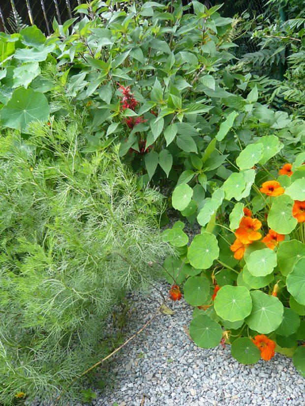 Druhove pestra bylinkova polykultura