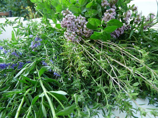 Atmosféra léčivých rostlin na vaší zahradě