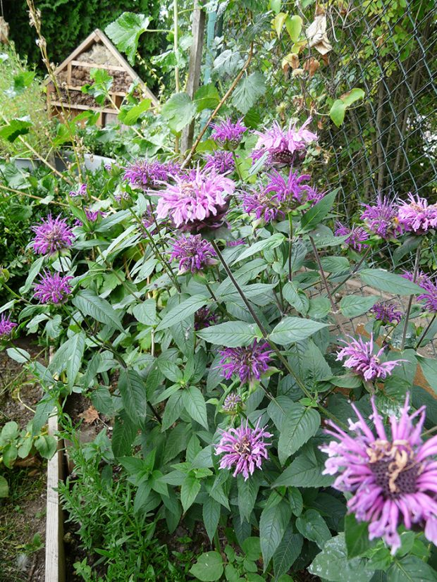 Většina bylinek je na péči nenáročná a dobře si poradí i se suchem.