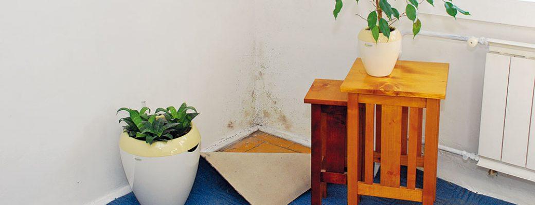 Jak na odstránění plísně ze stěn