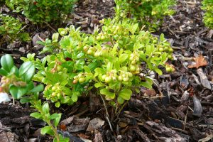 Jedlé okrasné rostliny, které nesmí chybět na žádné zahradě