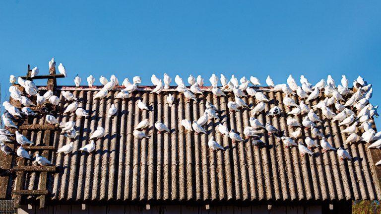 Jak postupovat při realizaci střechy