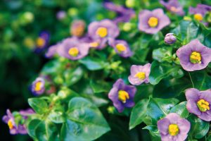 Jakými rostlinami dotvořit chodbu?