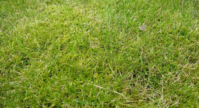 Dopřejte péči trávníku i na konci sezony