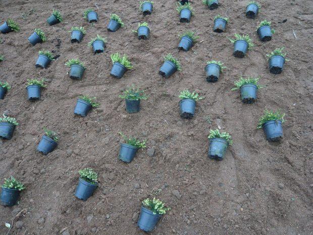 Rozmístění rostlin před výsadbou. foto: Lucie Peukertová